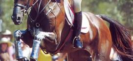 کتاب «تربيت اسب مسابقه» ـ شيلا ويلکاکس